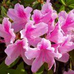 Какие цветы нельзя держать дома фото и приметы и поверья