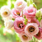Какие цветы сажать в январе на рассаду 2021