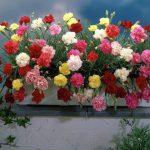 Благоприятные дни для посадки цветов в феврале 2020