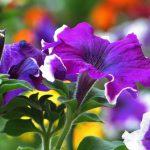 Благоприятные дни для посадки цветов в феврале 2021