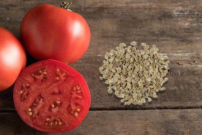 Как обработать семена томатов перед посадкой на рассаду