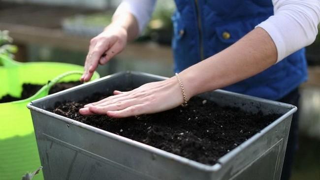 Как выбрать грунт для рассады томатов и перца