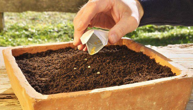 Посадка перца на рассаду в 2020 году по лунному календарю в марте