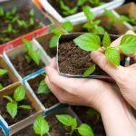 Лунный посевной календарь на февраль 2020 года садовода и огородника