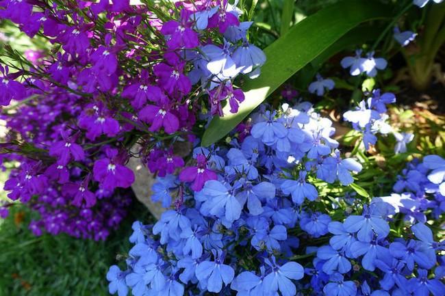 Какие цветы сажать в феврале на рассаду фото и название
