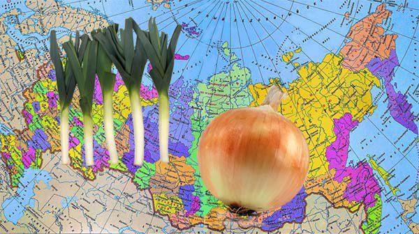 Сроки посадки лука-порей в 2020 году по лунному календарю