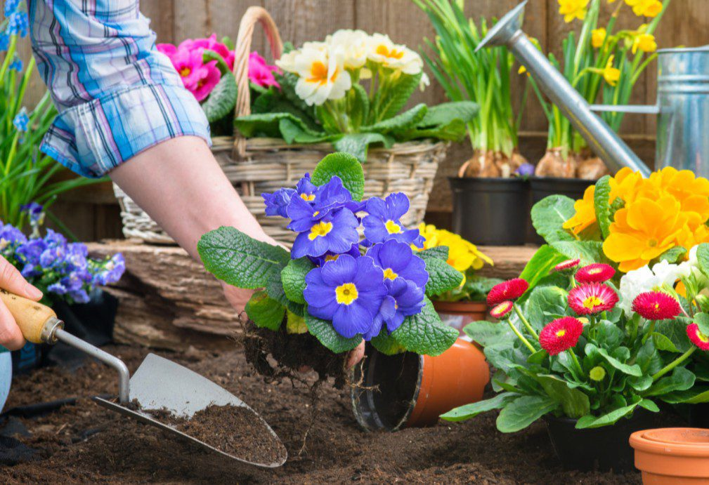 Благоприятные дни для посадки цветов в марте 2020