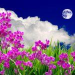 Благоприятные дни для посадки цветов в марте 2021
