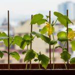 Как вырастить огурцы на подоконнике в квартире зимой