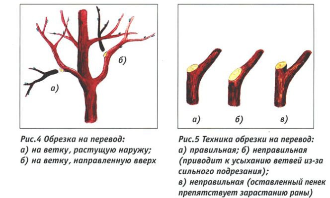 Обрезка вишни весной для начинающих в картинках пошагово