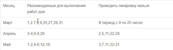 Посадка баклажан на рассаду в 2020 году по лунному календарю в Сибири