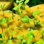 Проращивания семян на губке