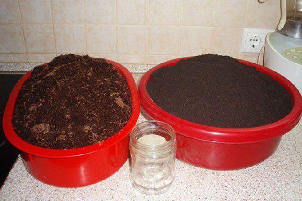 Как вырастить шпинат на подоконнике в квартире зимой