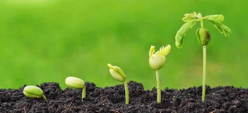 Способ замачивания семян в полиэтиленовых пакетиках