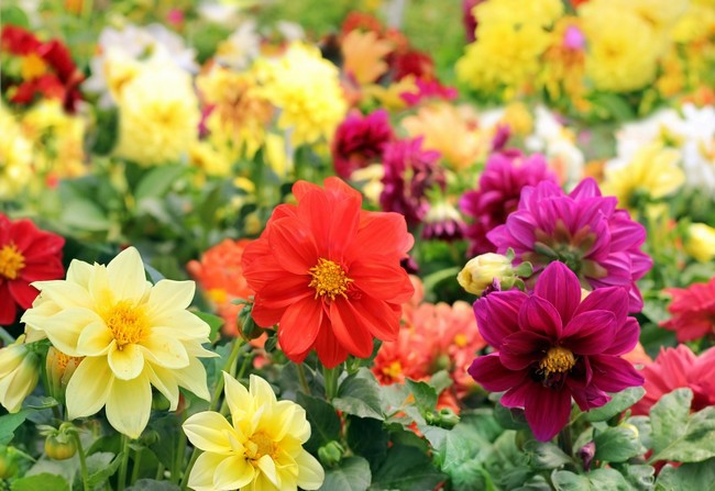 Благоприятные дни для посадки цветов в апреле 2020