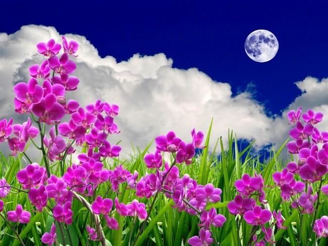 Посадка цветов на рассаду в 2020 году по лунному календарю