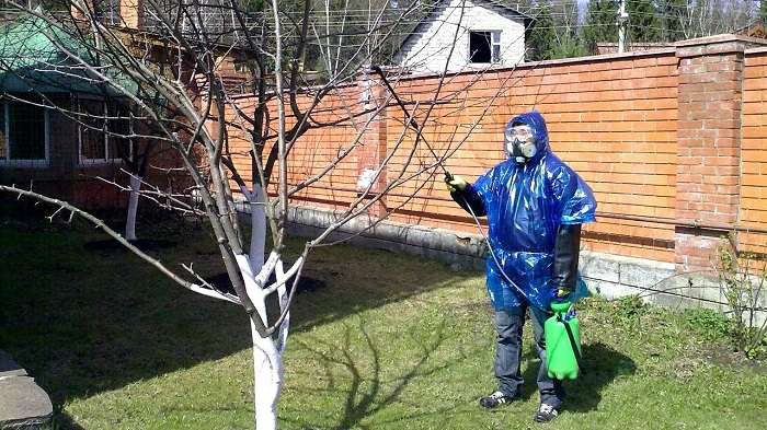 Обработка яблони весной от вредителей и болезней