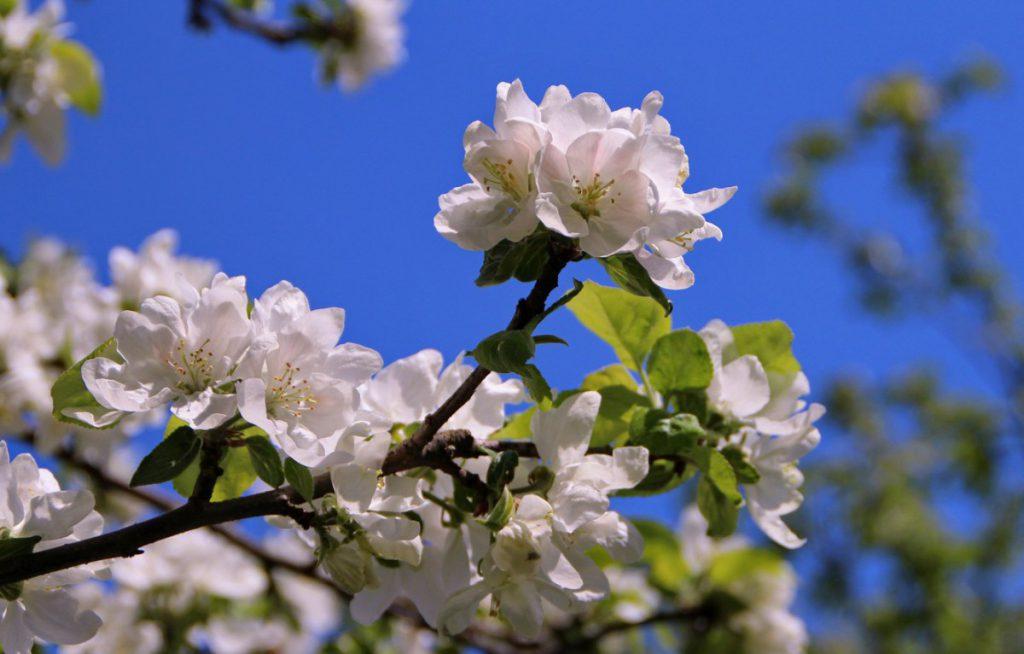 Лунный календарь на май 2020 года садовода и огородника цветовода