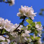 Лунный календарь на май 2021 года садовода и огородника цветовода