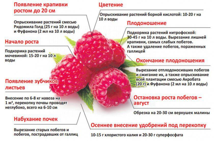 Подкормка малины весной до цветения