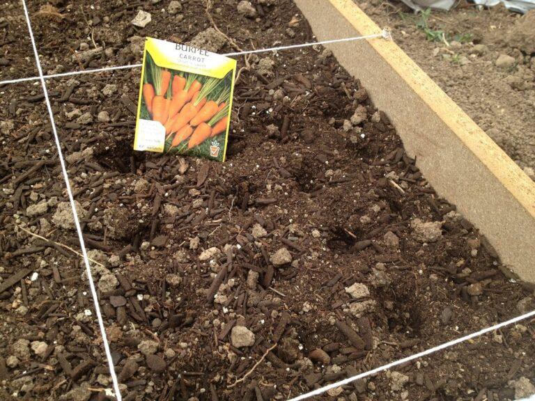 Как сажать морковь, чтобы не прореживать в 2020 году?