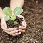 Благоприятные дни для посадки капусты в мае 2020 года по лунному календарю