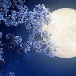 Фазы луны в мае 2020 года по дням благоприятные дни для посадки