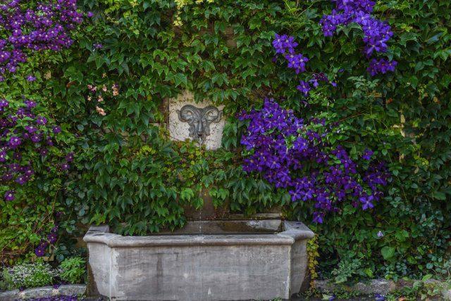Удобрения для клематисов летом в открытый грунт