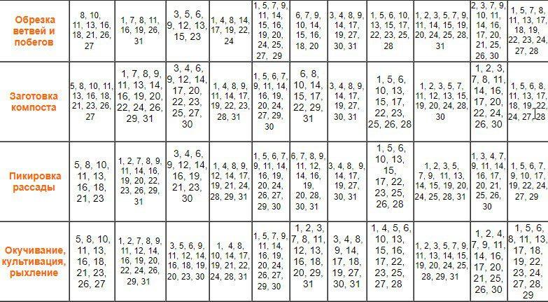 Календарь высадки рассады в грунт на июнь 2020 года