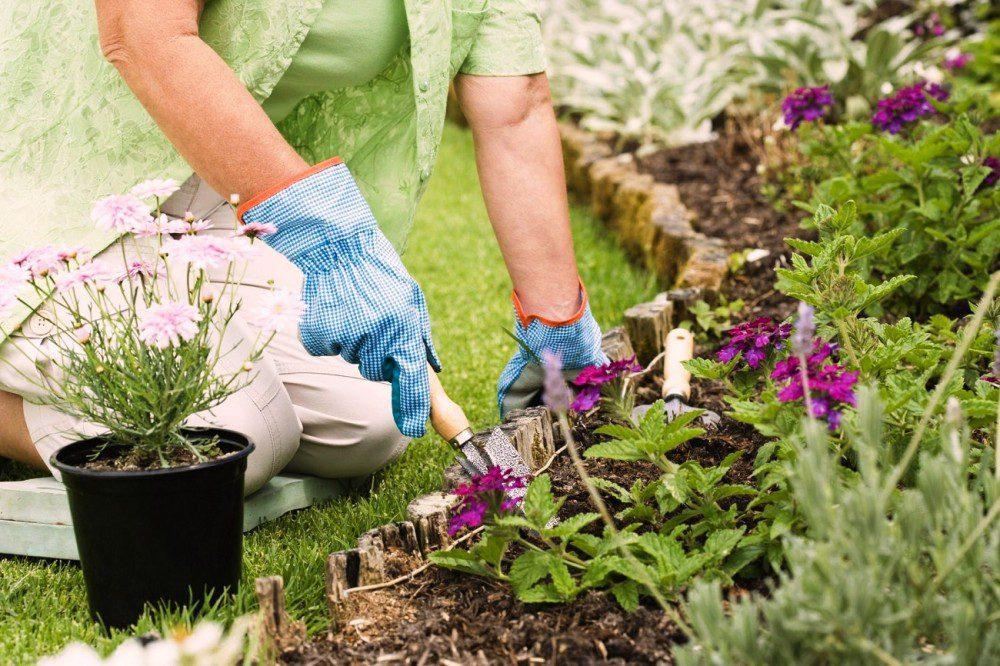 Лунный календарь на июнь 2020 года садовода и огородника цветовода
