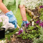 Лунный календарь на июнь 2021 года садовода и огородника цветовода
