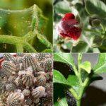 Паутинный клещ на комнатных растениях как бороться в домашних условиях