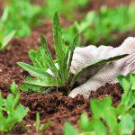 Борьба с сорняками проверенные способы