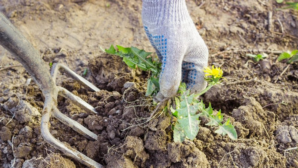 Борьба с травой и сорняками народными средствами