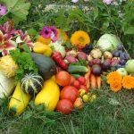 Лунный календарь на август 2021 года садовода и огородника цветовода