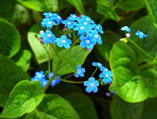 Какие цветы посадить осенью чтобы цвели весной и летом