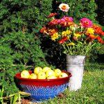 Лунный календарь на октябрь 2020 года садовода и огородника цветовода
