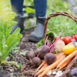 Лунный календарь на сентябрь 2020 года садовода и огородника цветовода