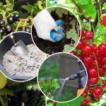 Какие удобрения внести для ягодных кустарников осенью