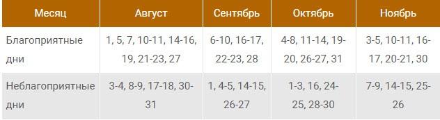Посадка клубники осенью в открытый грунт усами в Ленинградской области