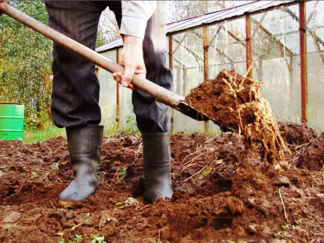 Какое удобрение нужно вносить осенью под картофель
