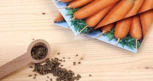 Посадка моркови в октябре 2020 по лунному календарю