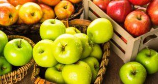 Когда снимать яблоки с дерева на хранение