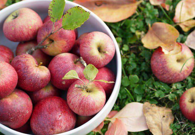 Благоприятные дни для сбора яблок в октябре 2020