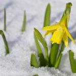 Лунный календарь садовода и огородника на март 2021 года посевной