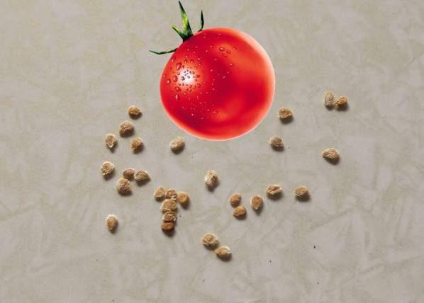 Посадка помидор на рассаду в 2021 году по лунному календарю