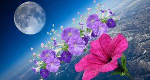 Посадка петунии на рассаду в 2021 году по лунному календарю в феврале