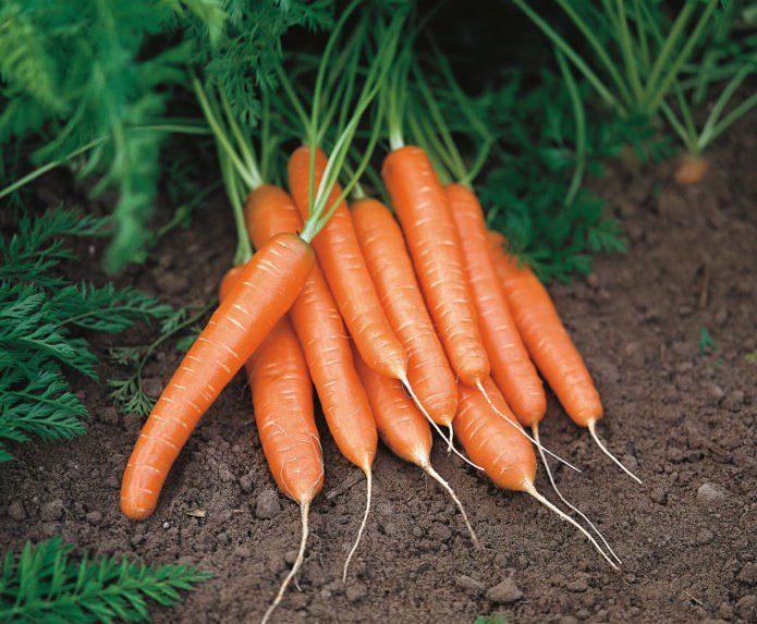 Посадка моркови в апреле 2021 благоприятные дни
