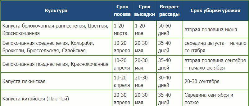 Посадка капусты на рассаду в 2021 году по лунному календарю в марте