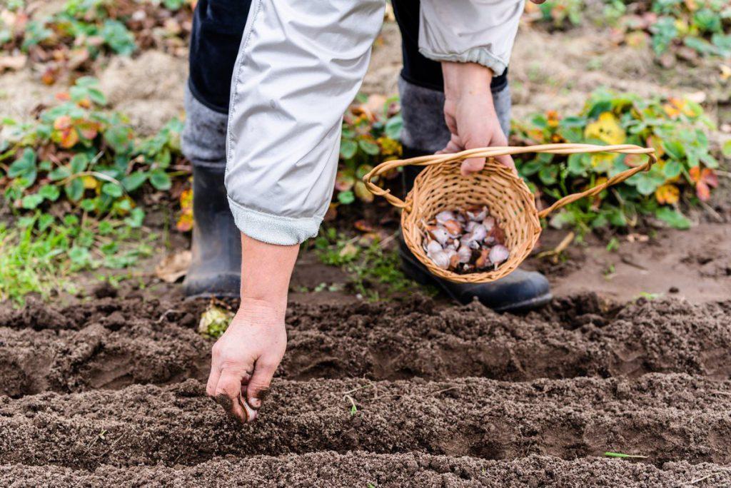 Что сажать в апреле в открытый грунт?